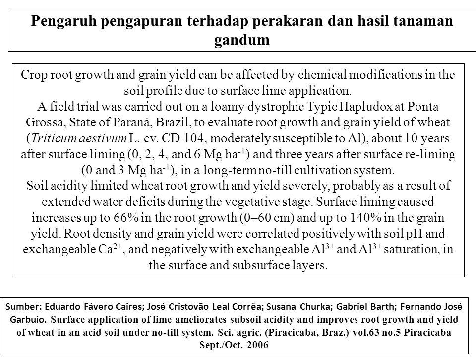 Crop root growth and grain yield can be affected by chemical modifications in the soil profile due to surface lime application.