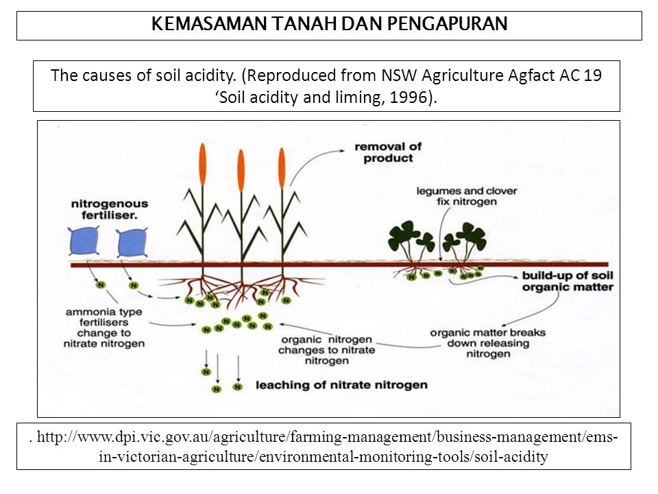 KEMASAMAN TANAH DAN PENGAPURAN The causes of soil acidity.