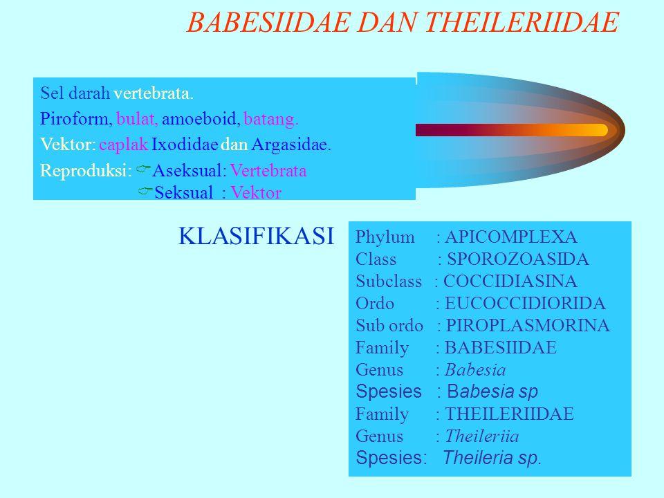 BABESIIDAE DAN THEILERIIDAE KLASIFIKASI Sel darah vertebrata. Piroform, bulat, amoeboid, batang. Vektor: caplak Ixodidae dan Argasidae. Reproduksi: 