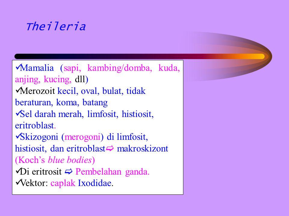 Theileria Mamalia (sapi, kambing/domba, kuda, anjing, kucing, dll) Merozoit kecil, oval, bulat, tidak beraturan, koma, batang Sel darah merah, limfosi