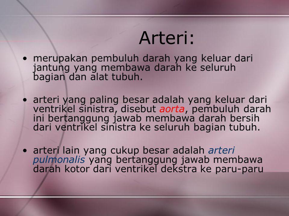 Arteri: merupakan pembuluh darah yang keluar dari jantung yang membawa darah ke seluruh bagian dan alat tubuh. arteri yang paling besar adalah yang ke