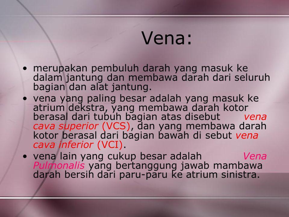 Vena: merupakan pembuluh darah yang masuk ke dalam jantung dan membawa darah dari seluruh bagian dan alat jantung. vena yang paling besar adalah yang