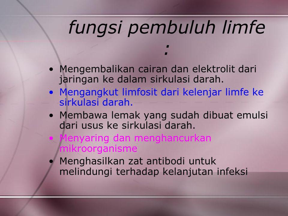 fungsi pembuluh limfe : Mengembalikan cairan dan elektrolit dari jaringan ke dalam sirkulasi darah. Mengangkut limfosit dari kelenjar limfe ke sirkula