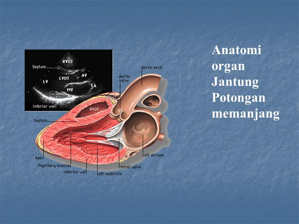 Anatomi organ Jantung Potongan memanjang