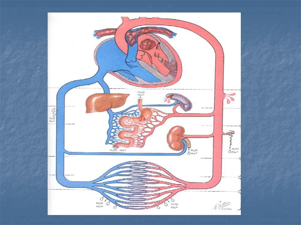 PEMBULUH DARAH PADA JANTUNG Vena Cafa Sup & Inf : menuangkan darah ke atrium kanan.
