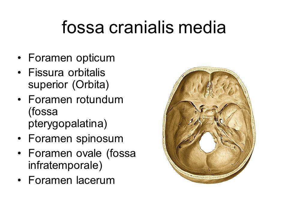 fossa cranialis media Foramen opticum Fissura orbitalis superior (Orbita) Foramen rotundum (fossa pterygopalatina) Foramen spinosum Foramen ovale (fos