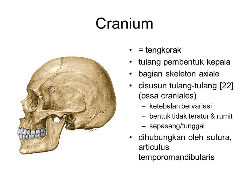 Cranium = tengkorak tulang pembentuk kepala bagian skeleton axiale disusun tulang-tulang [22] (ossa craniales) –ketebalan bervariasi –bentuk tidak ter