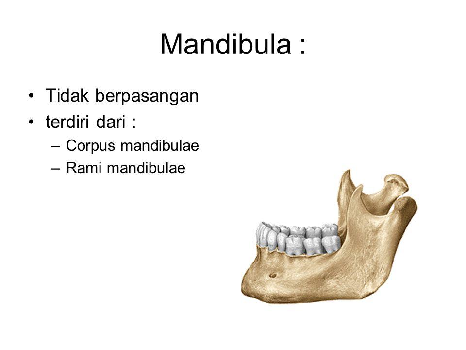 Mandibula : Tidak berpasangan terdiri dari : –Corpus mandibulae –Rami mandibulae
