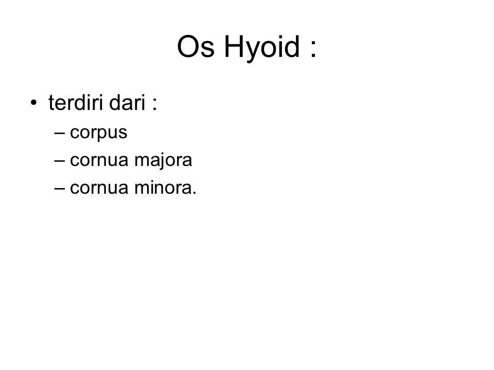 Os Hyoid : terdiri dari : –corpus –cornua majora –cornua minora.