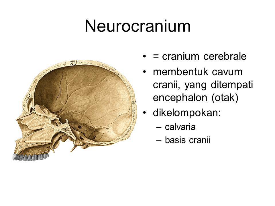 Neurocranium = cranium cerebrale membentuk cavum cranii, yang ditempati encephalon (otak) dikelompokan: –calvaria –basis cranii