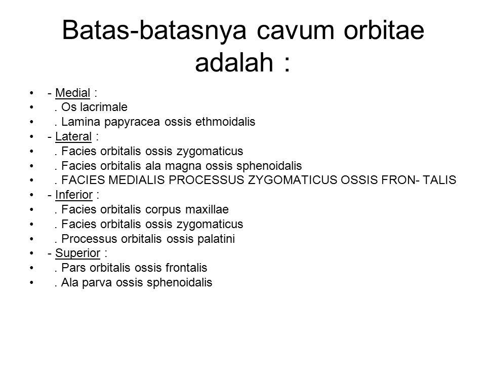Batas-batasnya cavum orbitae adalah : - Medial :. Os lacrimale. Lamina papyracea ossis ethmoidalis - Lateral :. Facies orbitalis ossis zygomaticus. Fa