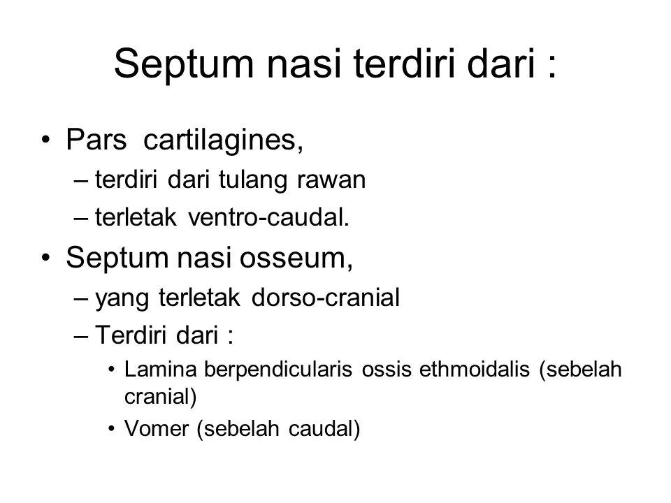 Septum nasi terdiri dari : Pars cartilagines, –terdiri dari tulang rawan –terletak ventro-caudal. Septum nasi osseum, –yang terletak dorso-cranial –Te