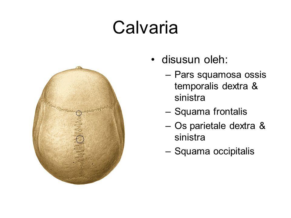 Calvaria disusun oleh: –Pars squamosa ossis temporalis dextra & sinistra –Squama frontalis –Os parietale dextra & sinistra –Squama occipitalis