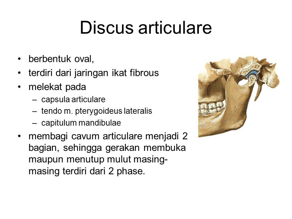 Discus articulare berbentuk oval, terdiri dari jaringan ikat fibrous melekat pada –capsula articulare –tendo m. pterygoideus lateralis –capitulum mand