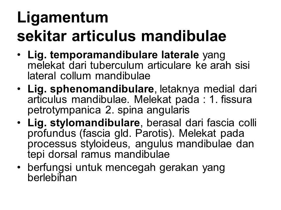 Ligamentum sekitar articulus mandibulae Lig. temporamandibulare laterale yang melekat dari tuberculum articulare ke arah sisi lateral collum mandibula