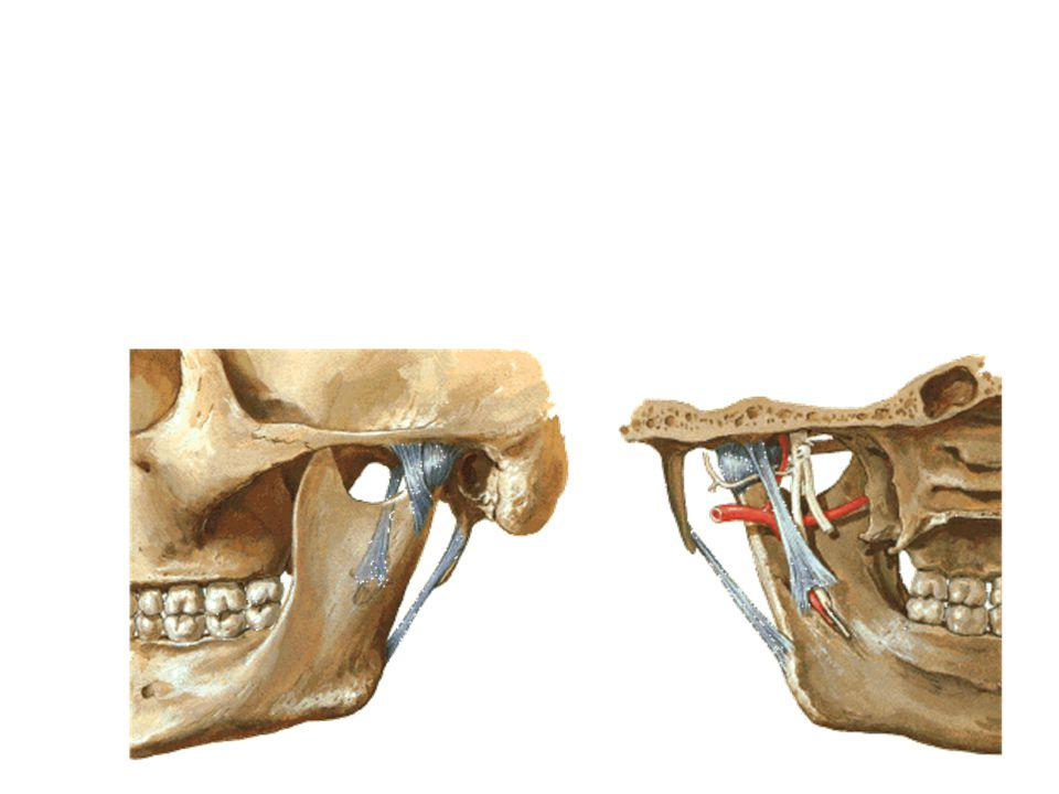 Komponen aktif Articulatio temporomandibularis : terdiri dari otot-otot masticatorius yang dikelompokkan menjadi: –A.