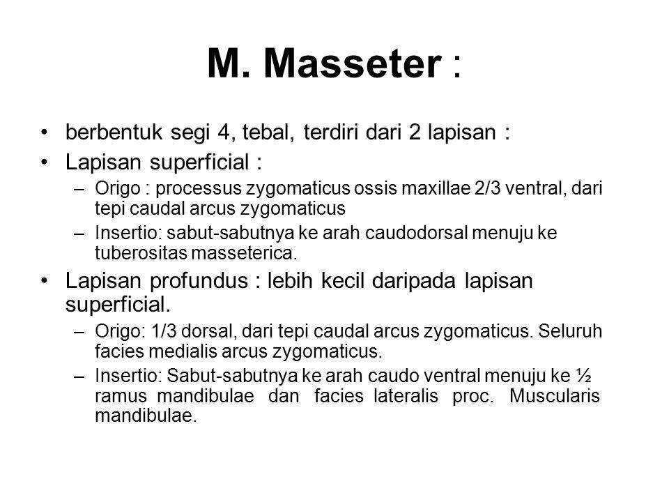 M. Masseter : berbentuk segi 4, tebal, terdiri dari 2 lapisan : Lapisan superficial : –Origo : processus zygomaticus ossis maxillae 2/3 ventral, dari