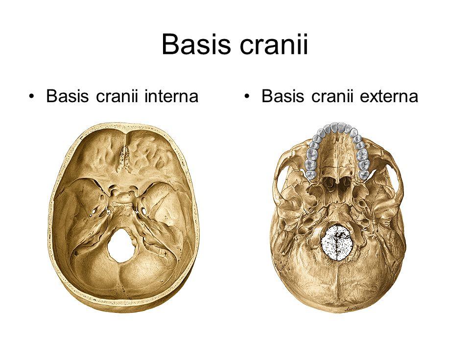 Basis cranii Basis cranii internaBasis cranii externa