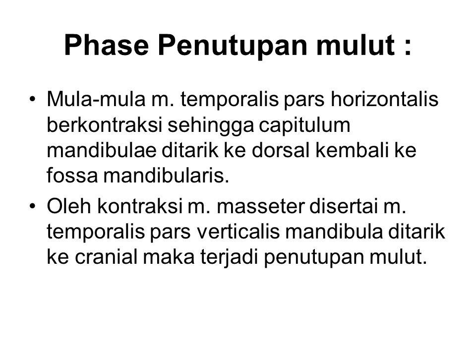Phase Penutupan mulut : Mula-mula m. temporalis pars horizontalis berkontraksi sehingga capitulum mandibulae ditarik ke dorsal kembali ke fossa mandib