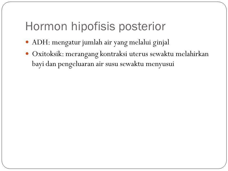 Hormon hipofisis posterior ADH: mengatur jumlah air yang melalui ginjal Oxitoksik: merangang kontraksi uterus sewaktu melahirkan bayi dan pengeluaran