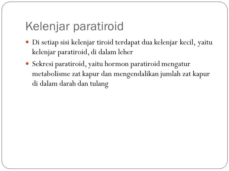 Kelenjar paratiroid Di setiap sisi kelenjar tiroid terdapat dua kelenjar kecil, yaitu kelenjar paratiroid, di dalam leher Sekresi paratiroid, yaitu ho