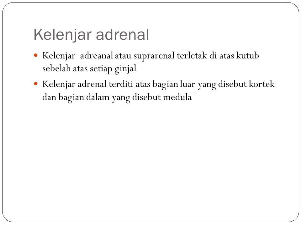 Kelenjar adrenal Kelenjar adreanal atau suprarenal terletak di atas kutub sebelah atas setiap ginjal Kelenjar adrenal terditi atas bagian luar yang di