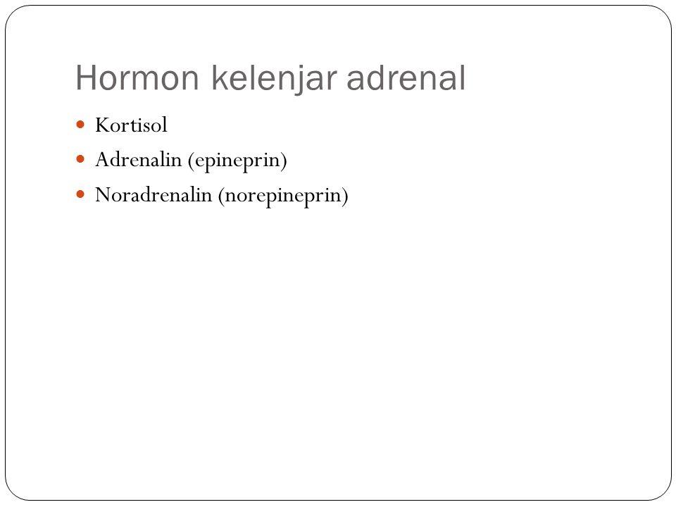 Hormon kelenjar adrenal Kortisol Adrenalin (epineprin) Noradrenalin (norepineprin)