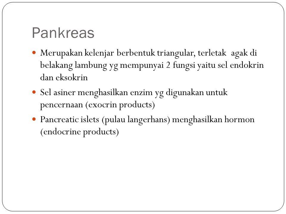 Pankreas Merupakan kelenjar berbentuk triangular, terletak agak di belakang lambung yg mempunyai 2 fungsi yaitu sel endokrin dan eksokrin Sel asiner m