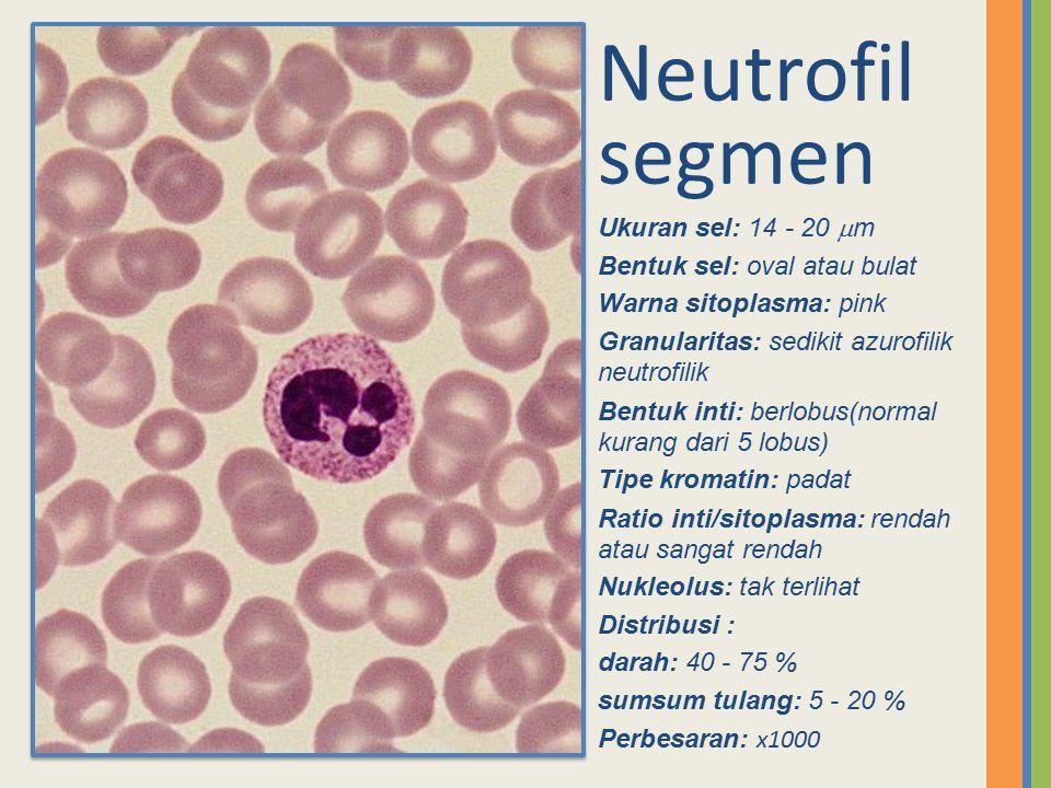 Neutrofil segmen Ukuran sel: 14 - 20  m Bentuk sel: oval atau bulat Warna sitoplasma: pink Granularitas: sedikit azurofilik neutrofilik Bentuk inti: berlobus(normal kurang dari 5 lobus) Tipe kromatin: padat Ratio inti/sitoplasma: rendah atau sangat rendah Nukleolus: tak terlihat Distribusi : darah: 40 - 75 % sumsum tulang: 5 - 20 % Perbesaran: x1000