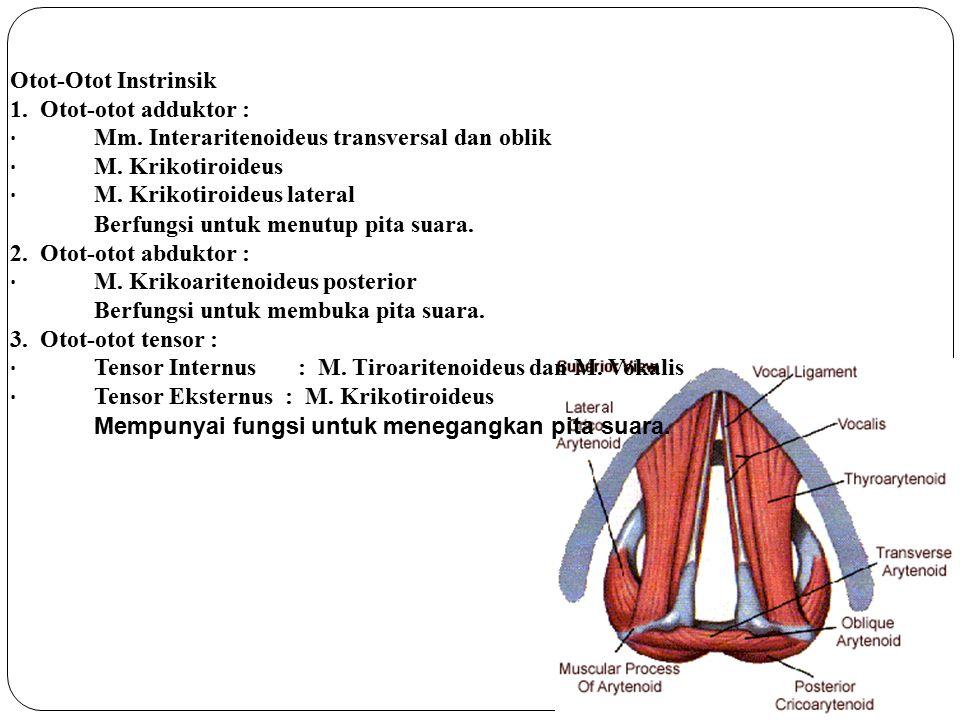 Otot-Otot Instrinsik 1. Otot-otot adduktor : · Mm. Interaritenoideus transversal dan oblik · M. Krikotiroideus · M. Krikotiroideus lateral Berfungsi u