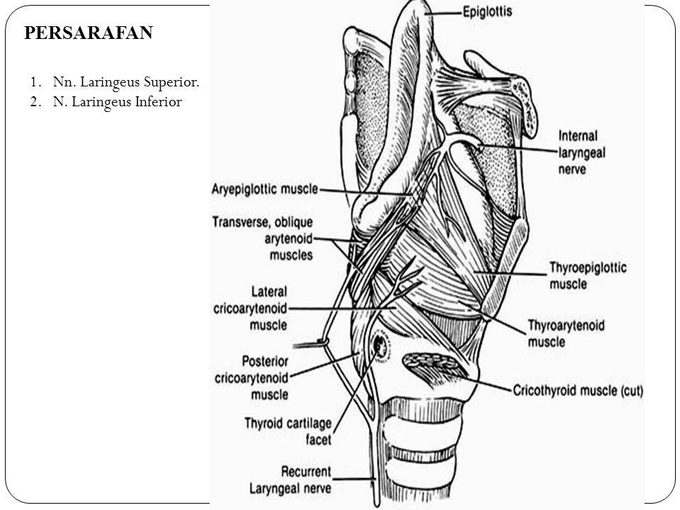 VASKULARISASI 1.Arteri Laringeus Superior Berjalan bersama ramus interna N.