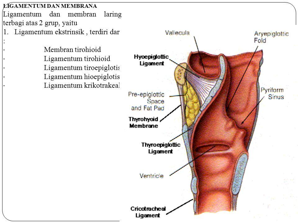 LIGAMENTUM DAN MEMBRANA Ligamentum dan membran laring terbagi atas 2 grup, yaitu 1. Ligamentum ekstrinsik, terdiri dari : · Membran tirohioid · Ligame