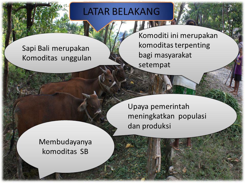 Komoditi ini merupakan komoditas terpenting bagi masyarakat setempat Membudayanya komoditas SB Upaya pemerintah meningkatkan populasi dan produksi Sapi Bali merupakan Komoditas unggulan LATAR BELAKANG