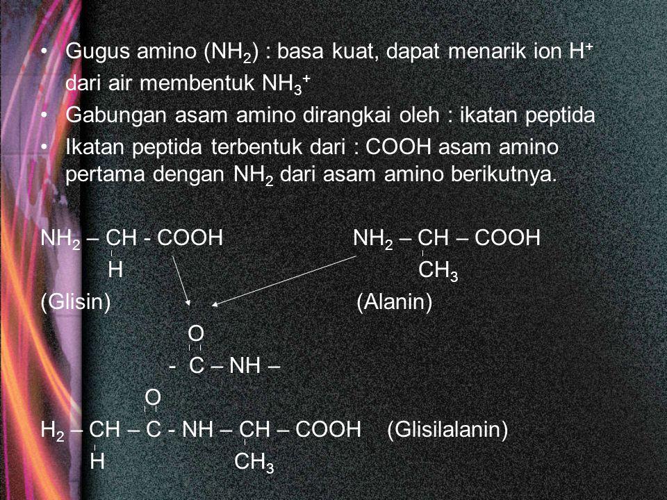 Gugus amino (NH 2 ) : basa kuat, dapat menarik ion H + dari air membentuk NH 3 + Gabungan asam amino dirangkai oleh : ikatan peptida Ikatan peptida terbentuk dari : COOH asam amino pertama dengan NH 2 dari asam amino berikutnya.