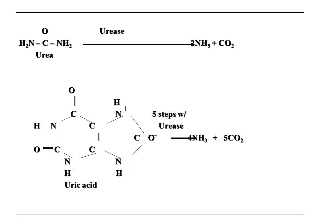 O Urease O Urease H 2 N – C – NH 2 2NH 3 + CO 2 Urea Urea O H C N 5 steps w/ C N 5 steps w/ H N C Urease H N C Urease C O 4NH 3 + 5CO 2 C O 4NH 3 + 5C
