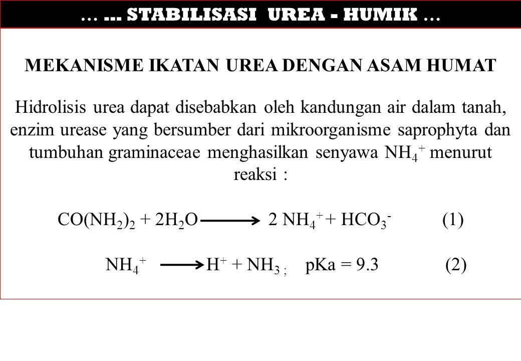… … STABILISASI UREA - HUMIK … MEKANISME IKATAN UREA DENGAN ASAM HUMAT Hidrolisis urea dapat disebabkan oleh kandungan air dalam tanah, enzim urease y