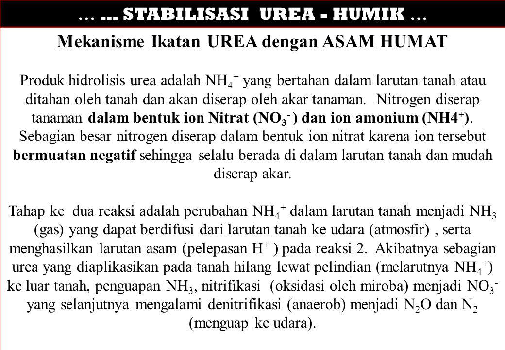 … … STABILISASI UREA - HUMIK … Mekanisme Ikatan UREA dengan ASAM HUMAT Produk hidrolisis urea adalah NH 4 + yang bertahan dalam larutan tanah atau dit