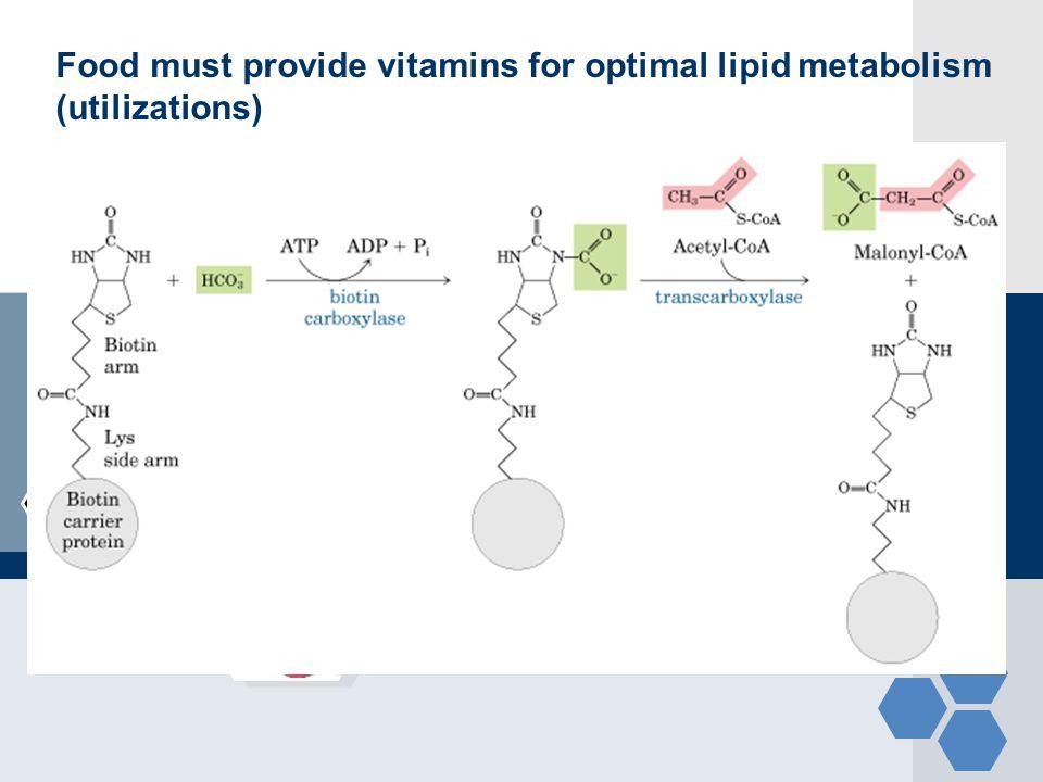 Food must provide vitamins for optimal lipid metabolism (utilizations)