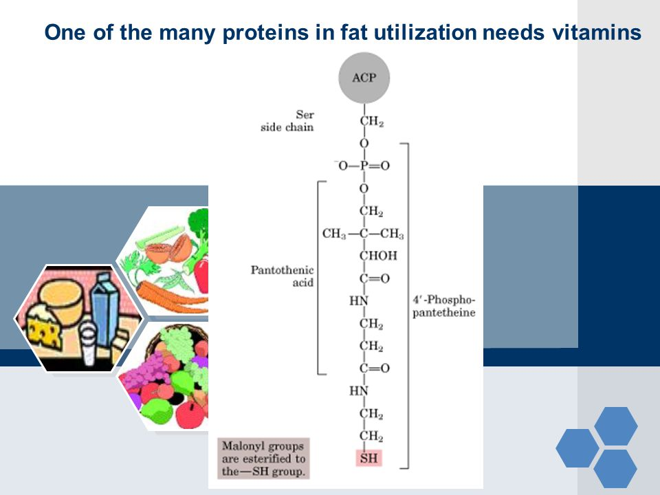 One of the many proteins in fat utilization needs vitamins