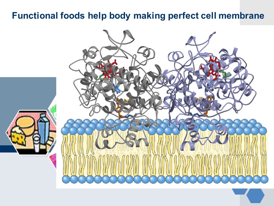 Functional foods help body making perfect cell membrane