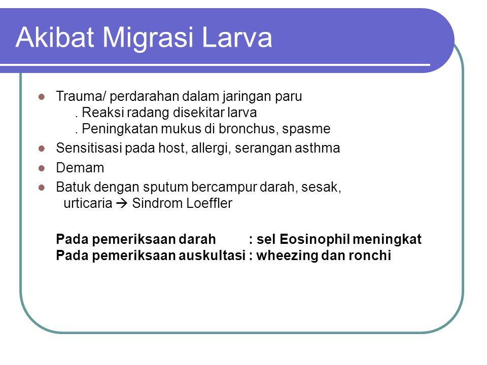 Akibat Migrasi Larva Trauma/ perdarahan dalam jaringan paru. Reaksi radang disekitar larva. Peningkatan mukus di bronchus, spasme Sensitisasi pada hos