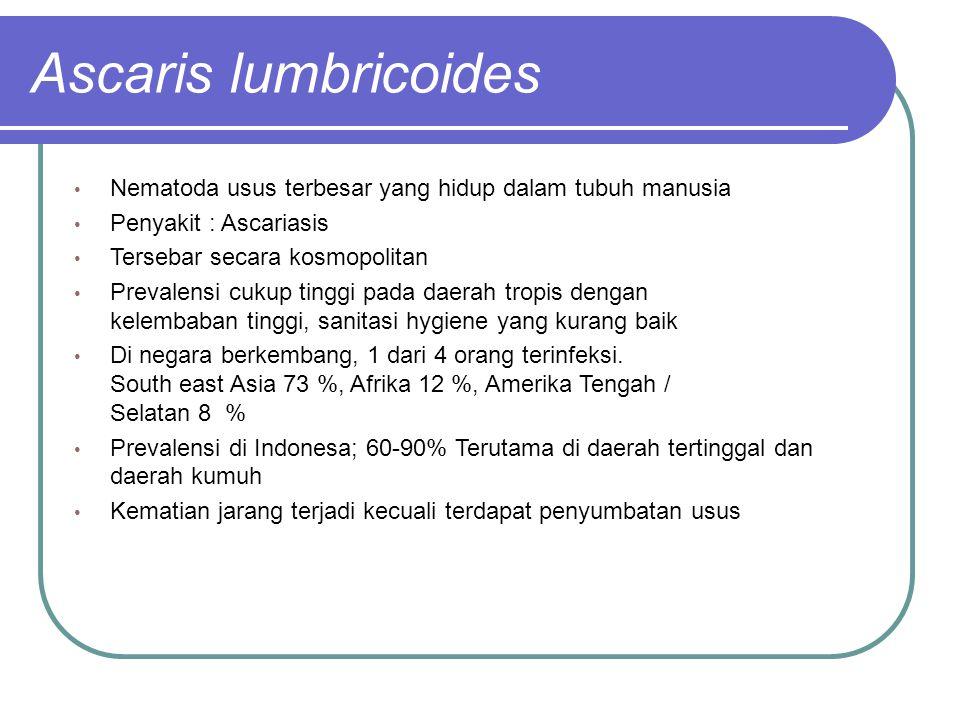 Ascaris lumbricoides Nematoda usus terbesar yang hidup dalam tubuh manusia Penyakit : Ascariasis Tersebar secara kosmopolitan Prevalensi cukup tinggi