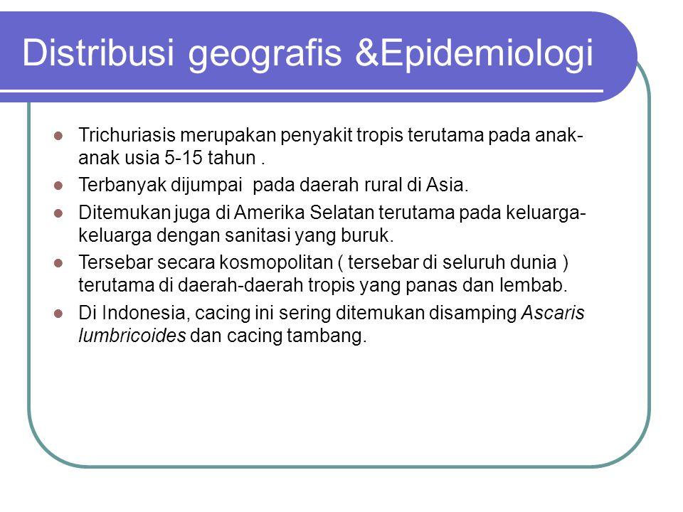 Distribusi geografis &Epidemiologi Trichuriasis merupakan penyakit tropis terutama pada anak- anak usia 5-15 tahun. Terbanyak dijumpai pada daerah rur