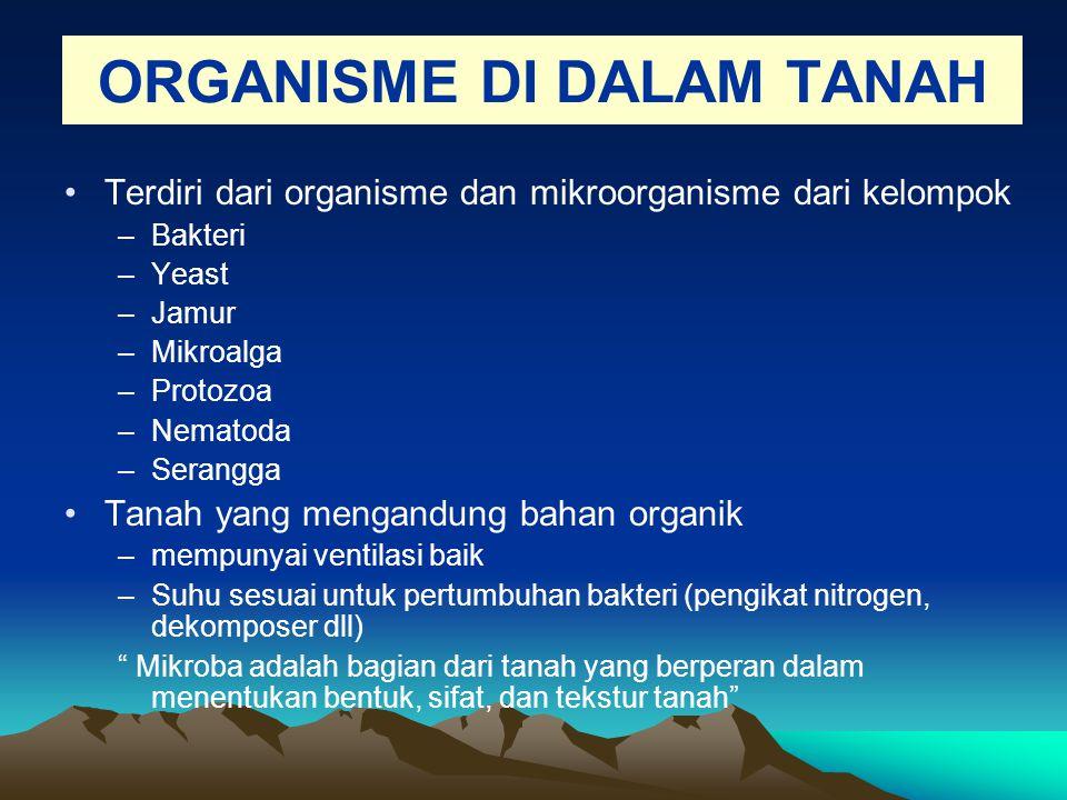 ORGANISME DI DALAM TANAH Terdiri dari organisme dan mikroorganisme dari kelompok –Bakteri –Yeast –Jamur –Mikroalga –Protozoa –Nematoda –Serangga Tanah