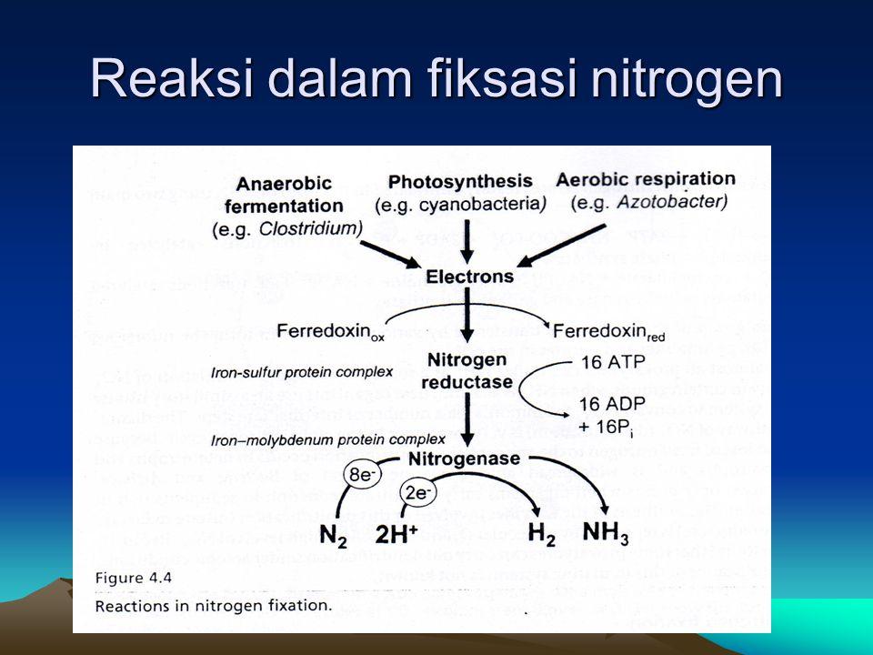 Reaksi dalam fiksasi nitrogen