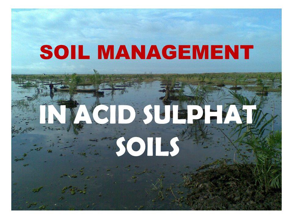 Acid Sulphate Soil ASS Soil Management Water Management Max Yield Infrastruktur hidrologi Tata Lahan dan air Fertilizer Ameliorase Drainage System Irigation System Leaching Tide prevention Oxidation prevention