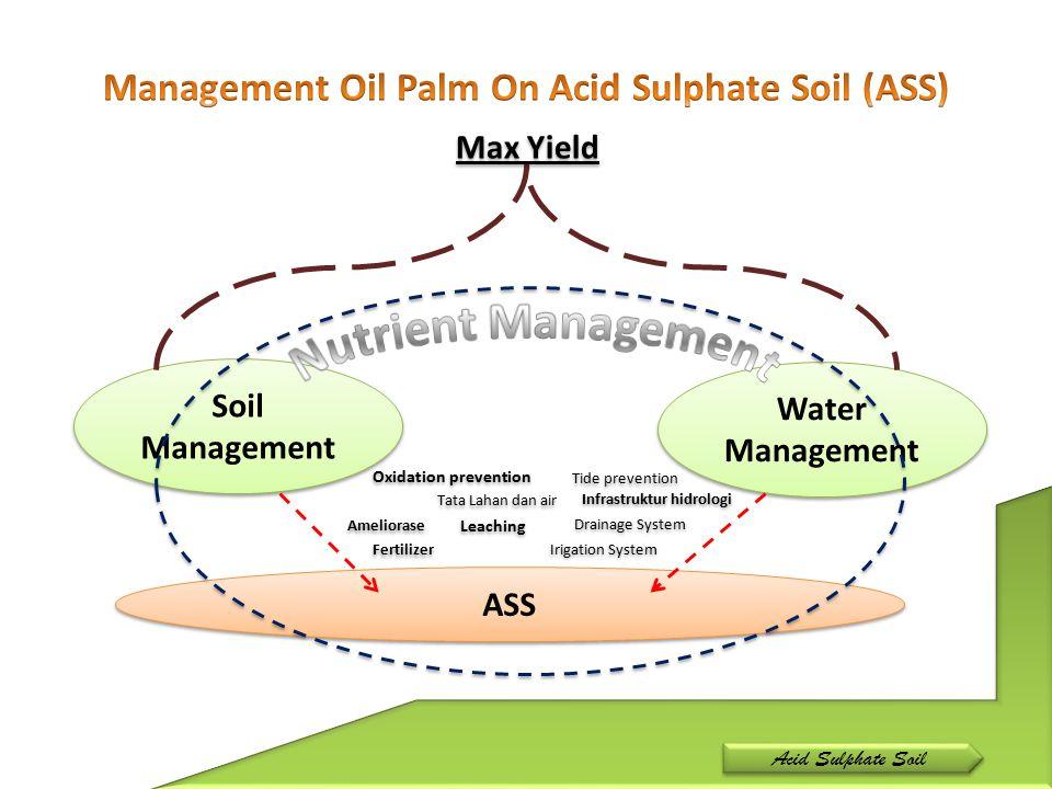 Acid Sulphate Soil Soil Management Water Management Elevation Pyrite Depth Structure (evaporation, percolation, permeability, infiltration,etc) Tide Fluctuation Rainfall Water Quality (Nutrient, pH, etc)