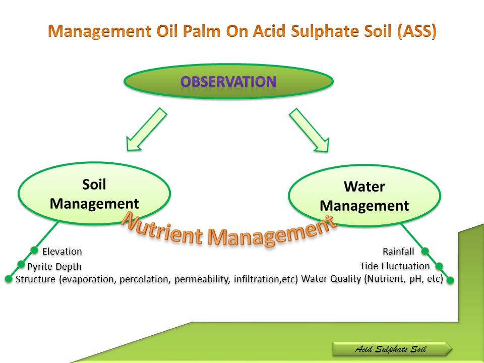 Acid Sulphate Soil Soil Management Water Management Elevation Pyrite Depth Structure (evaporation, percolation, permeability, infiltration,etc) Tide F