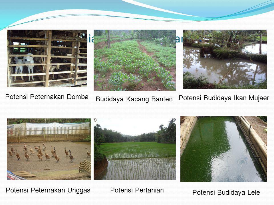 Potensi Pertanian, Peternakan dan Perikanan Potensi Peternakan Domba Potensi Budidaya Ikan Mujaer Potensi Budidaya Lele Potensi Peternakan UnggasPoten