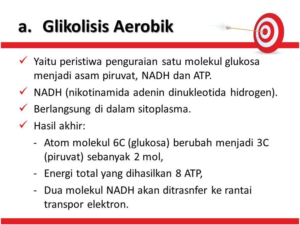 a.Glikolisis Aerobik Yaitu peristiwa penguraian satu molekul glukosa menjadi asam piruvat, NADH dan ATP.